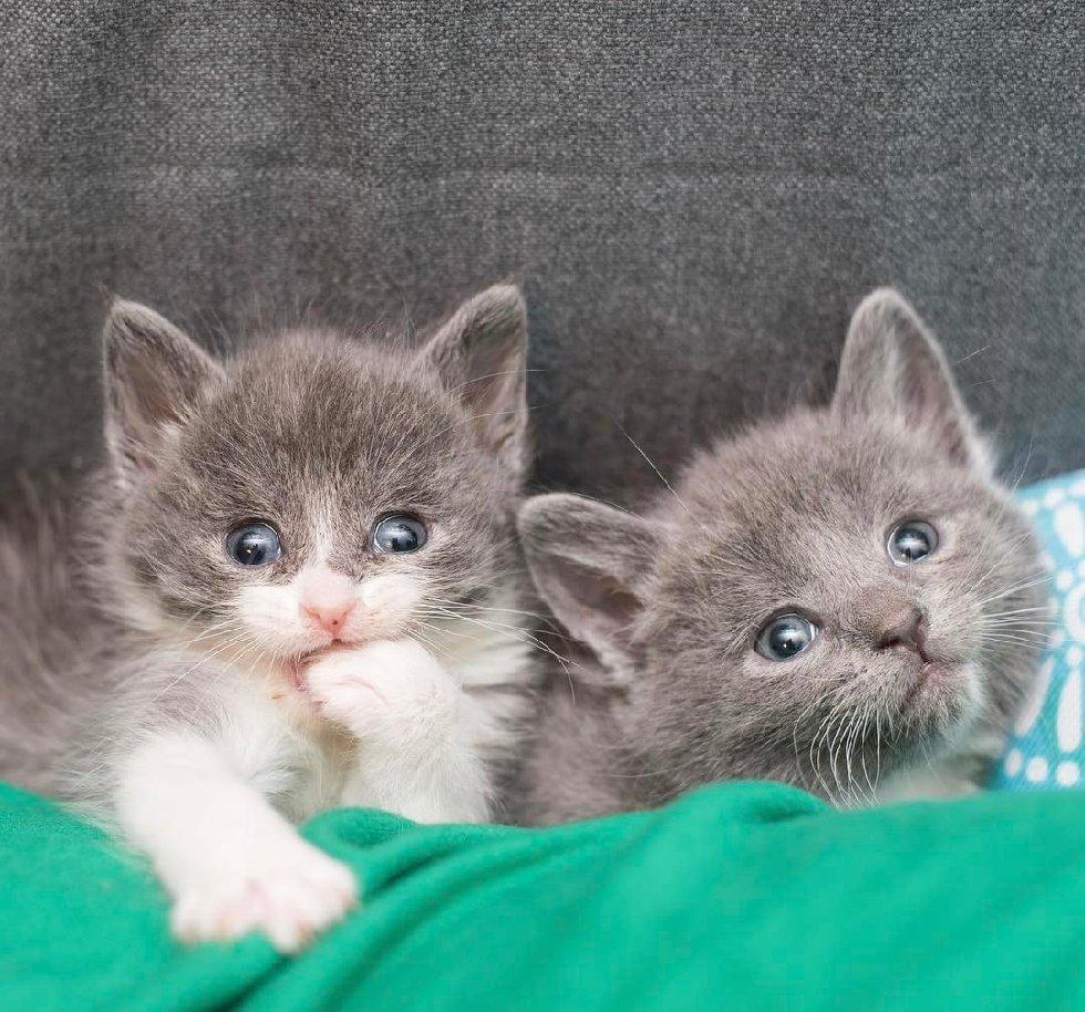 """""""Мы спасаем самых слабых..."""" У этих красивейших кошек - одно сердце на двоих! рис 7"""