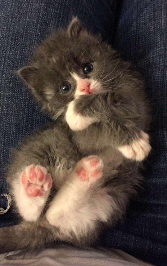 """Маленький кот по прозвищу """"Мышонок"""" родился совсем не обычным... И вот в кого он вырос сейчас! рис 6"""