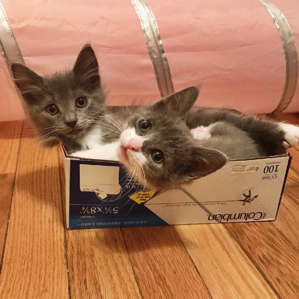"""""""Мы спасаем самых слабых..."""" У этих красивейших кошек - одно сердце на двоих! рис 9"""