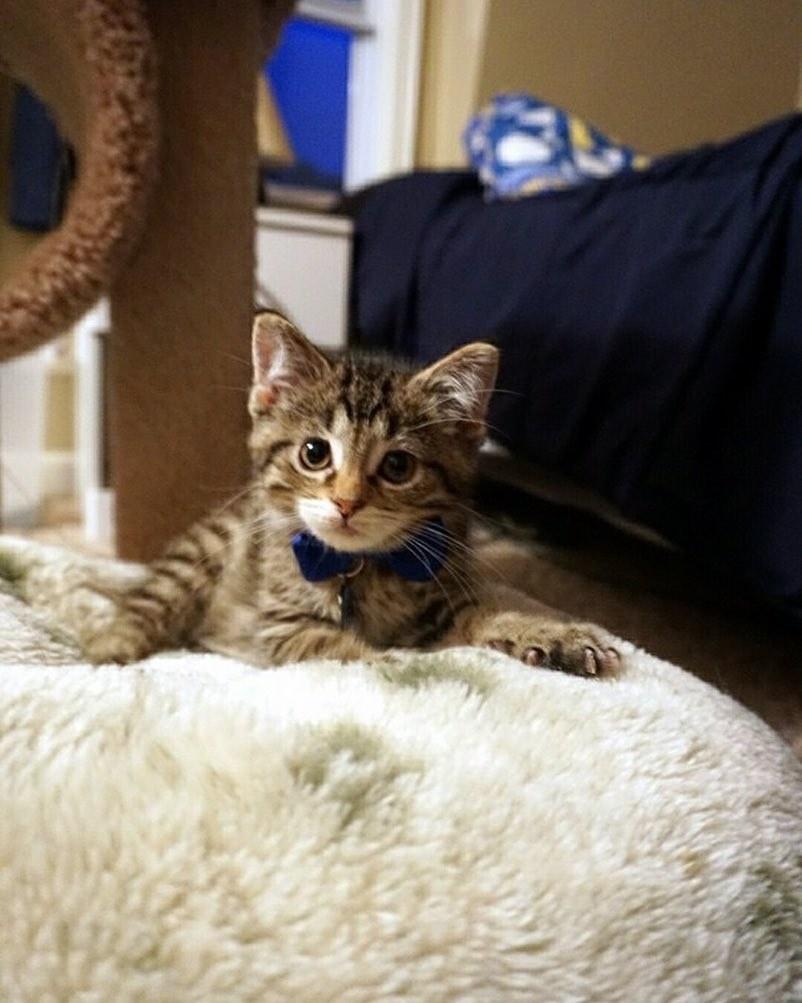 Никто не знал, сколько ему осталось! Седьмой, самый маленький, котёнок падал на пол при каждом шаге, но теперь... рис 2