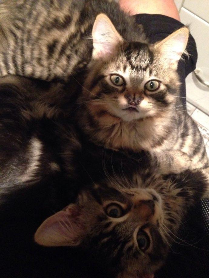 Это - особенный кот с носом в виде БАБОЧКИ. Но не любить же его из-за этого меньше? рис 8