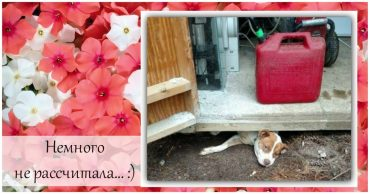 BeFunky Collageуу