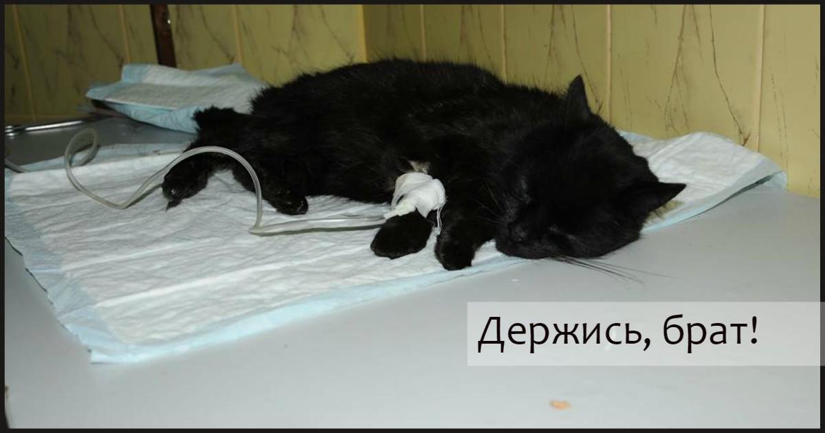 """""""Чуть не приговорили кота!"""" В клинике ошиблись с диагнозом - пациент выжил лишь благодаря удивительному совпадению!"""