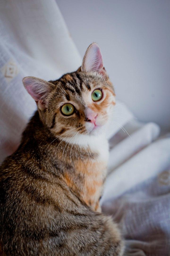 Кошка с сюрпризами! О том, как Матильда обзавелась зелёным тазом и выкинула фортель с форточкой рис 2