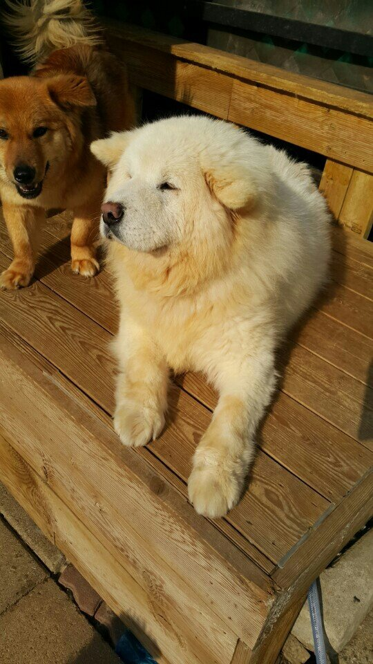 NTD-Dong-Jin-The-thin-to-Fluffy-Pup04