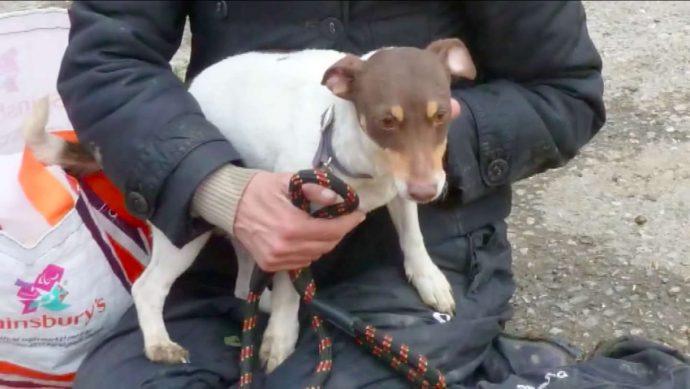 Он скрылся под землёй в узкой трубе... Что делать, если собака безнадёжно пропала 4 дня назад? рис 10