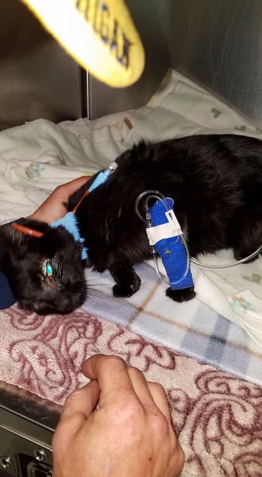 NTD-cat-found-living-under-floorboards-7