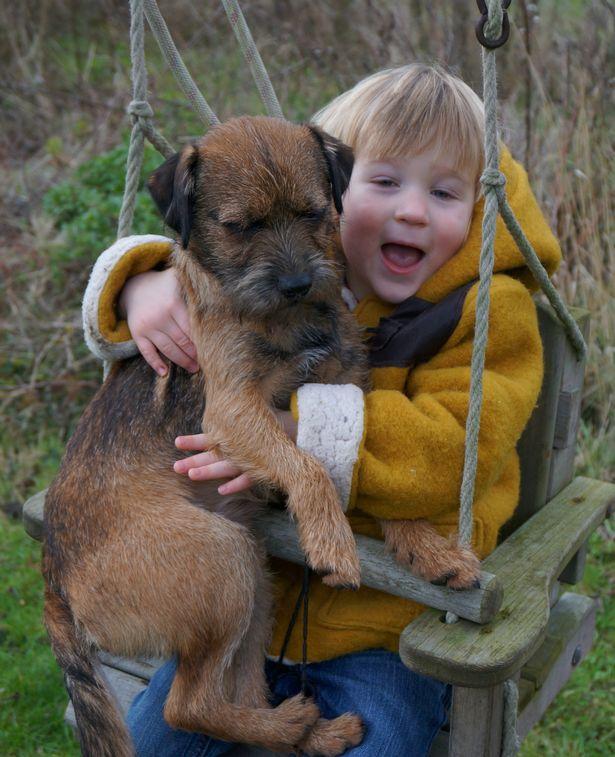 """""""Нашёлся?!"""" Безутешному мальчику вернули украденного щенка, вот только он ли это? рис 8"""