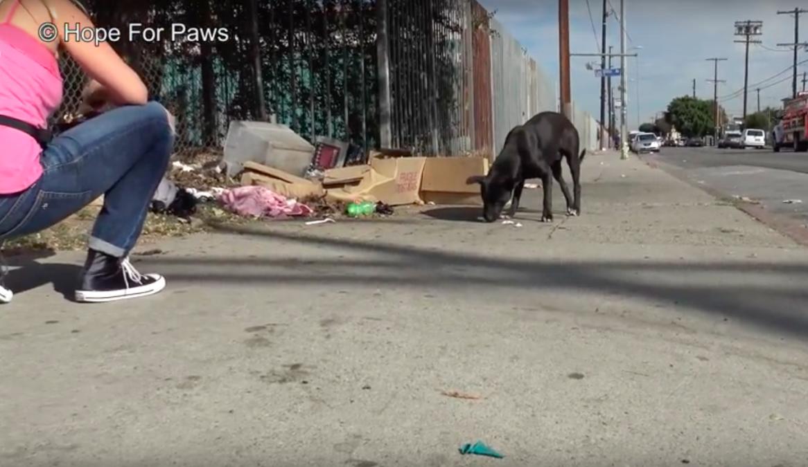 Пёс был так голоден, что жевал картон с запахом рыбы... К счастью, волонтеры спасли его от голода и одиночества!