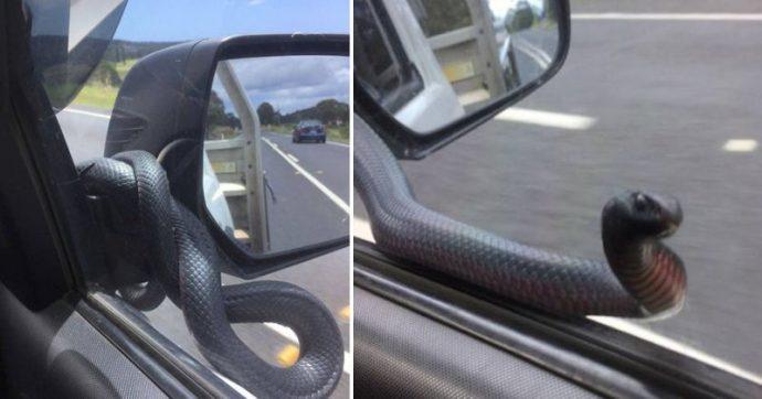 """""""Такси заказывали?"""" Опасная змея решила прокатиться с ветерком - но как же отреагировал водитель?"""