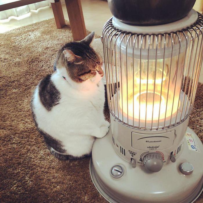 cat-heater-busao-tanryug-22-5a6aef0bc6818__700