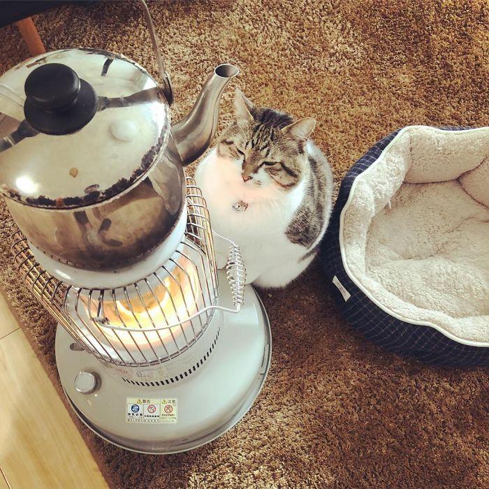 cat-heater-busao-tanryug-25-5a6aef10e0f5d__700