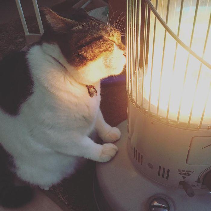 cat-heater-busao-tanryug-4-5a6aeee59b1f8__700