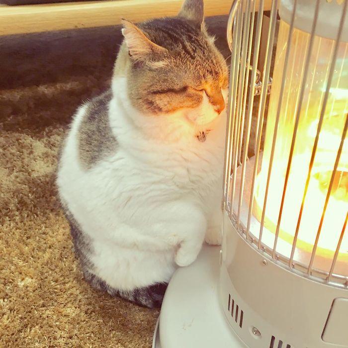 cat-heater-busao-tanryug-8-5a6aeeedc8982__700