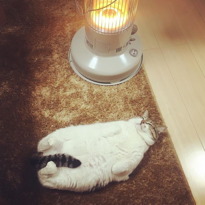 cat-heater-busao-tanryug-9-5a6aeeefaf276__700