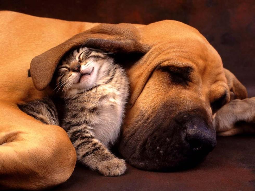 catslovedogs02 (1)