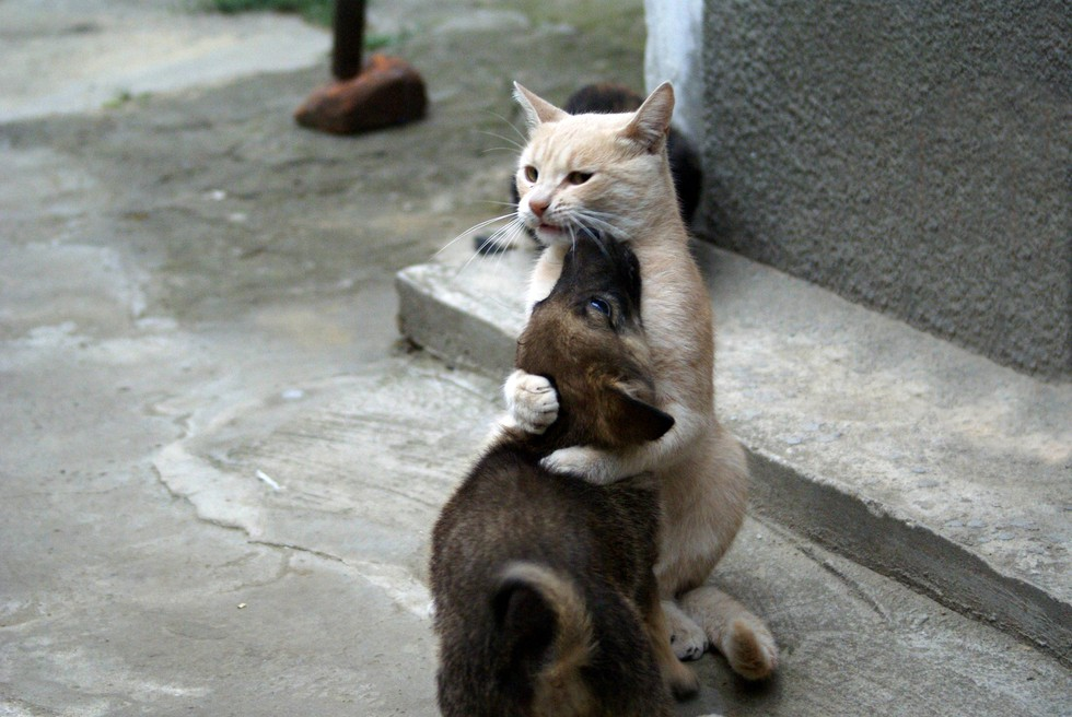 catslovedogs06