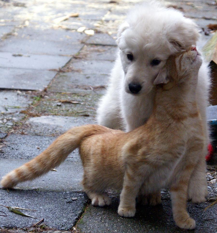 catslovedogs12