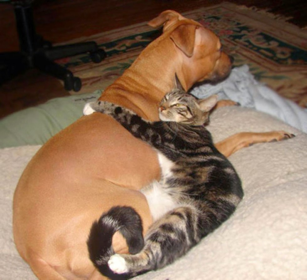 catslovedogs14