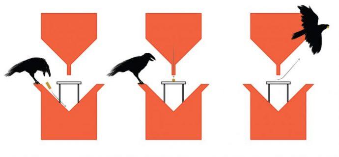 Голландских ворон учат убирать окурки за людьми! Или, может быть, у людей проснется совесть? рис 3