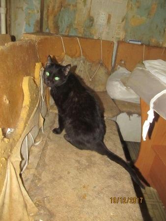 Калуга: квартиранты этой квартиры - 38 котов! Все они заперты в одной комнате, волонтёры в отчаянии...