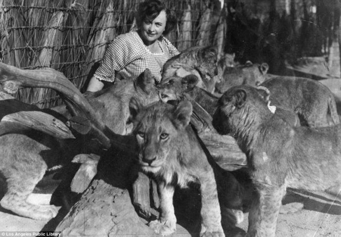 Их выращивали для голливудских фильмов! Редчайшие фото львиной фермы прошлого века рис 11