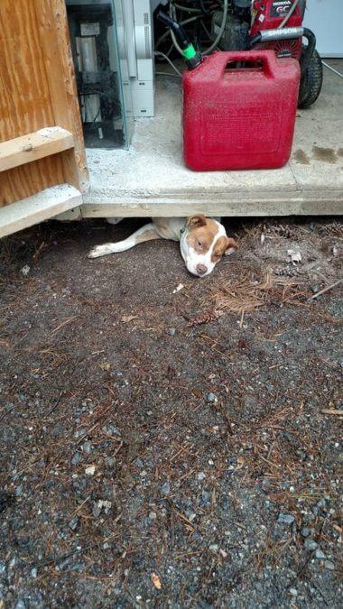 Беременная Тыква хотела сбежать из приюта, но застряла в щели из-за ЖИВОТА! Пришлось поднимать сарай...