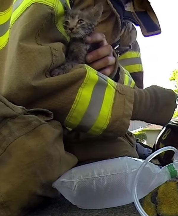 Пожар едва не унес жизнь маленького котенка... Как же пожарные сумели спасти такого кроху? рис 9