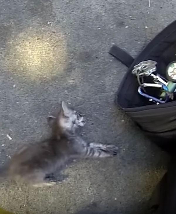 Пожар едва не унес жизнь маленького котенка... Как же пожарные сумели спасти такого кроху? рис 5