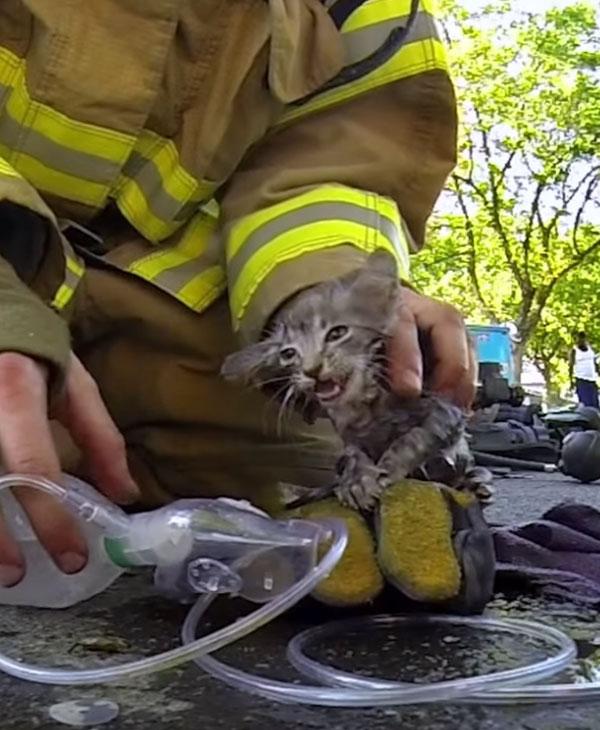 Пожар едва не унес жизнь маленького котенка... Как же пожарные сумели спасти такого кроху? рис 8