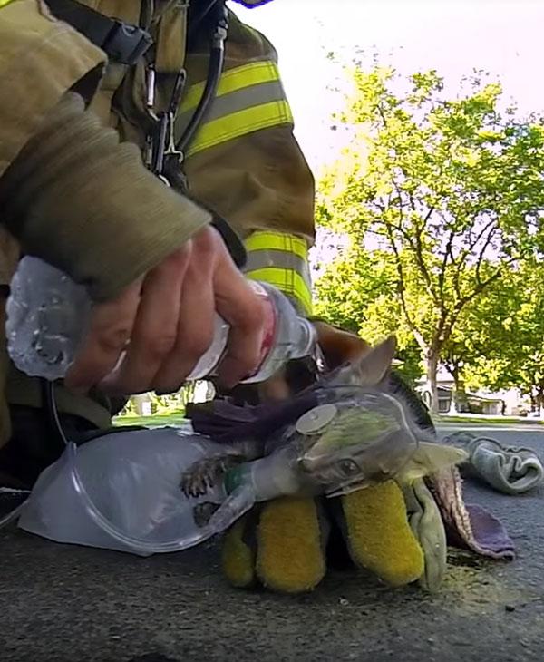 Пожар едва не унес жизнь маленького котенка... Как же пожарные сумели спасти такого кроху? рис 7