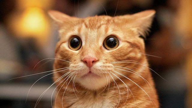 Про кота Рыжика: вот почему я очень хочу быть котом! Жизненная зарисовка