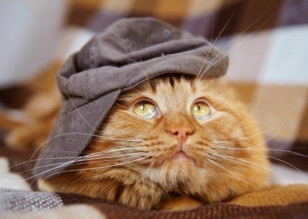 Про кота Рыжика: вот почему я очень хочу быть котом! Жизненная зарисовка рис 2