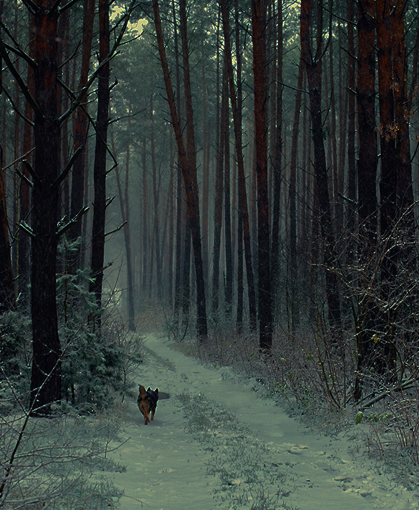 По ночной дороге метался пёс...  Он очень ждал людей, чтоб повести их за собой - к пылающему дому! рис 2