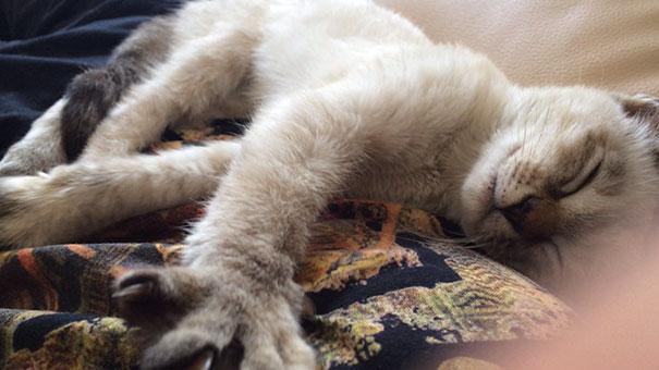 stray-cat-chooses-owner-vell-kawasaki-hina-10