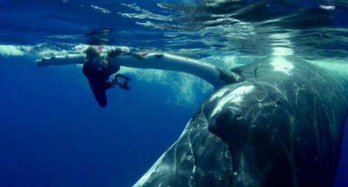 zag-whale
