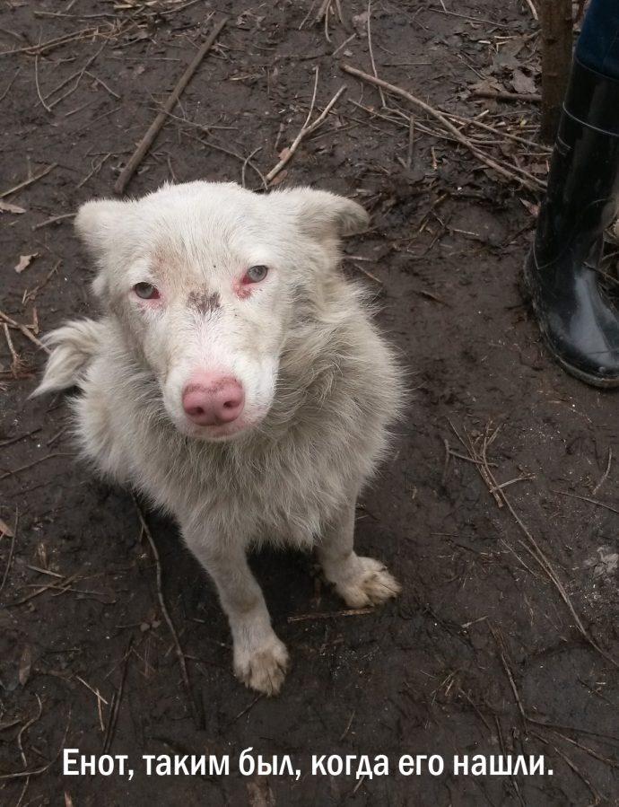 """""""Мы сделали всё, что могли..."""" Люся, Маша и Енот – выжившие собаки из Ваулино рис 10"""