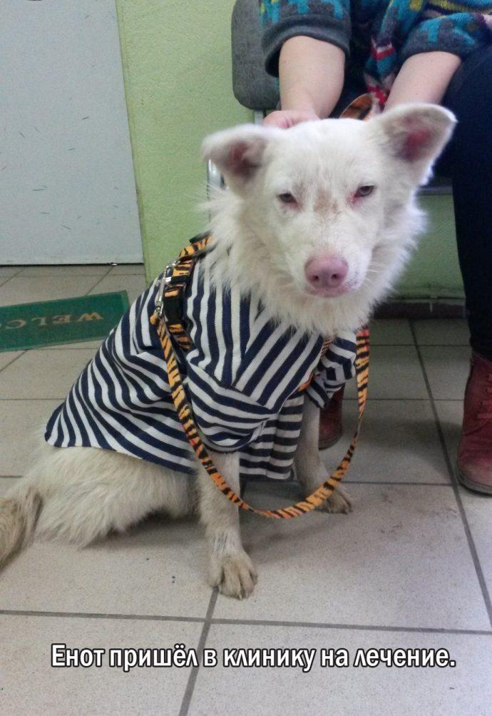 """""""Мы сделали всё, что могли..."""" Люся, Маша и Енот – выжившие собаки из Ваулино рис 11"""