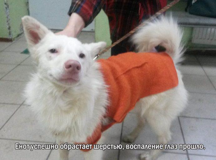 """""""Мы сделали всё, что могли..."""" Люся, Маша и Енот – выжившие собаки из Ваулино рис 12"""
