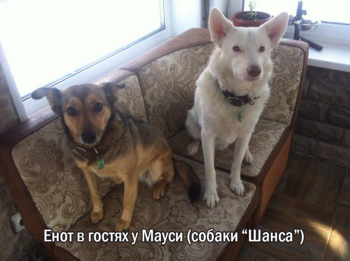"""""""Мы сделали всё, что могли..."""" Люся, Маша и Енот – выжившие собаки из Ваулино рис 13"""