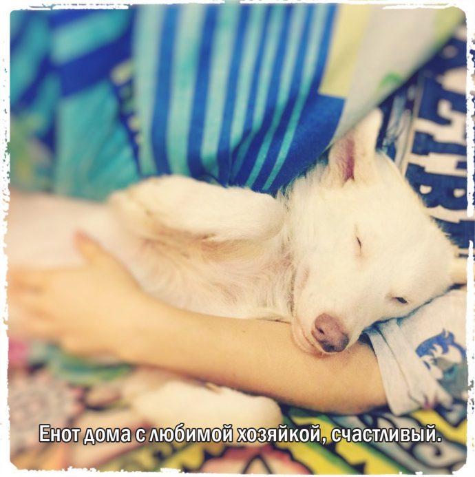 """""""Мы сделали всё, что могли..."""" Люся, Маша и Енот – выжившие собаки из Ваулино рис 14"""
