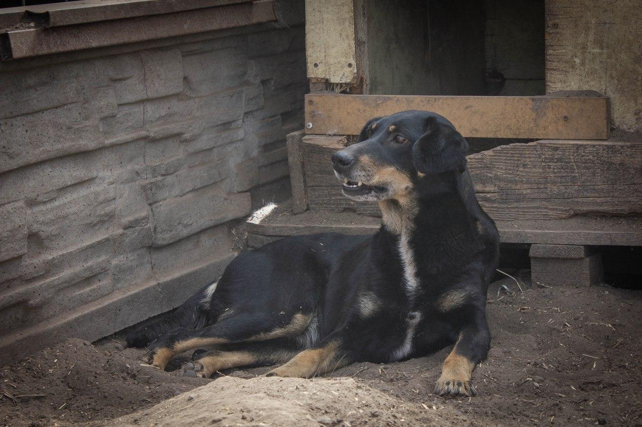 История Землянички - ласковой собаки, которую едва не разрубили пополам!