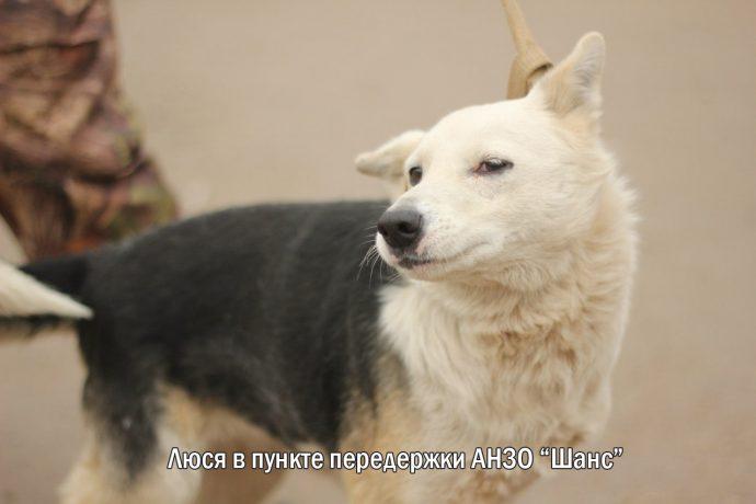 """""""Мы сделали всё, что могли..."""" Люся, Маша и Енот – выжившие собаки из Ваулино рис 2"""