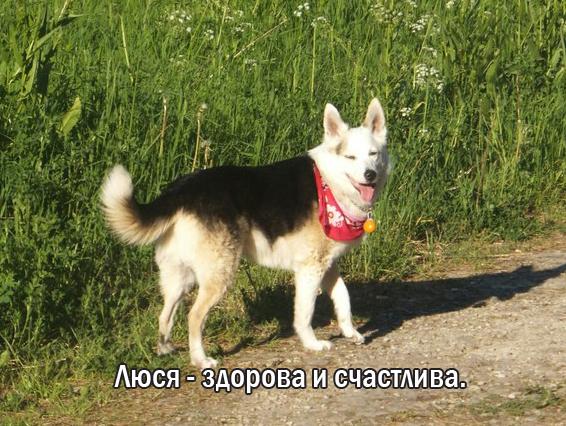 """""""Мы сделали всё, что могли..."""" Люся, Маша и Енот – выжившие собаки из Ваулино рис 5"""