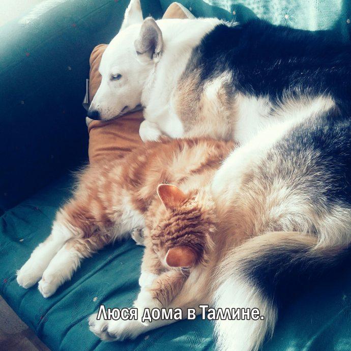 """""""Мы сделали всё, что могли..."""" Люся, Маша и Енот – выжившие собаки из Ваулино рис 4"""