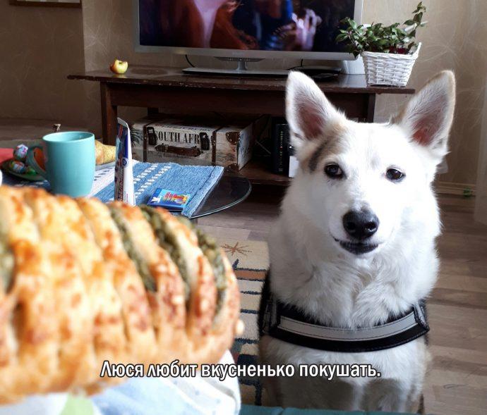 """""""Мы сделали всё, что могли..."""" Люся, Маша и Енот – выжившие собаки из Ваулино рис 3"""