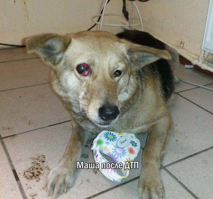 """""""Мы сделали всё, что могли..."""" Люся, Маша и Енот – выжившие собаки из Ваулино рис 6"""