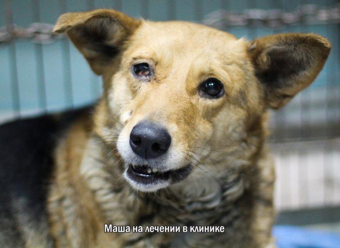 """""""Мы сделали всё, что могли..."""" Люся, Маша и Енот – выжившие собаки из Ваулино рис 7"""