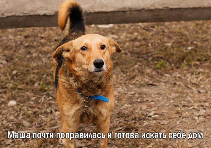 """""""Мы сделали всё, что могли..."""" Люся, Маша и Енот – выжившие собаки из Ваулино рис 8"""
