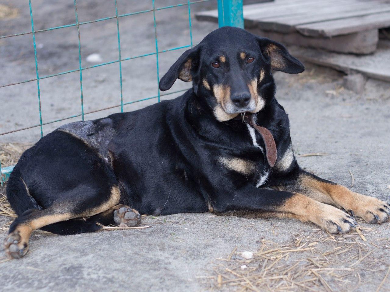 История Землянички - ласковой собаки, которую едва не разрубили пополам! рис 7